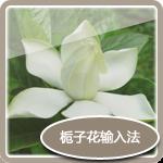Gardenia input pattern